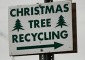 Xmas Aftermath: What To Do With Your Christmas Tree After Christmas